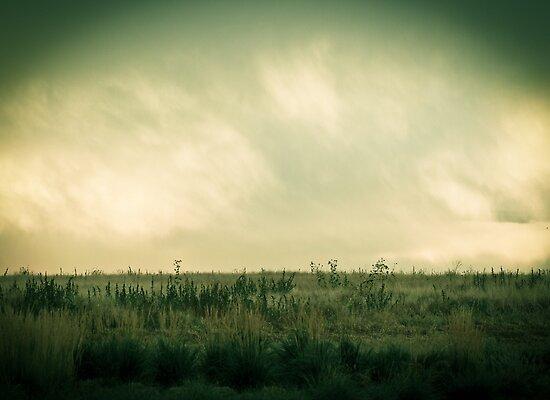 Field by Jen Wahl