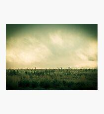 Field Photographic Print