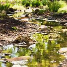 Creek Side by Jessica Manelis
