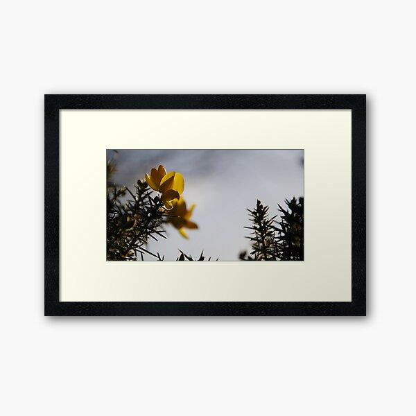Yellow Gorse Dragons Framed Art Print