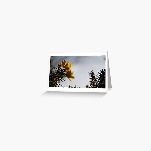 Yellow Gorse Dragons Greeting Card