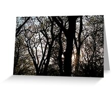Sunset Through the Trees Greeting Card