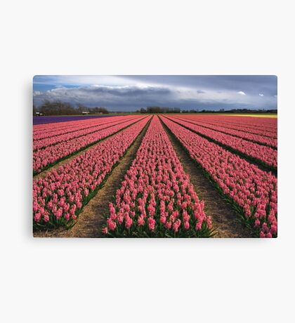 Pink Hyacinth Field Canvas Print