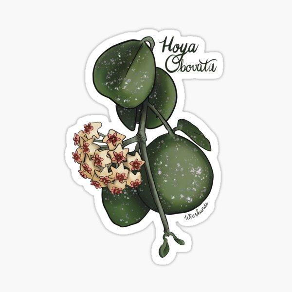 Hoya obovata illustration Sticker