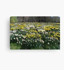 Altered Daffodils Canvas Print