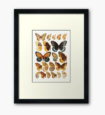The Macrolepidoptera of the world a systematic account of all the known Butterflies Moths Adalbert Seitz V1 V3 1906 173 Euptoieta Argynnis Framed Print