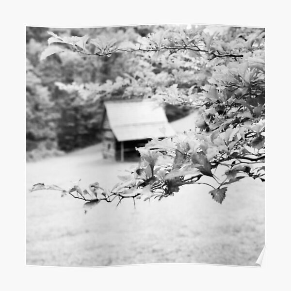 Black and White Cabin Photograph Poster