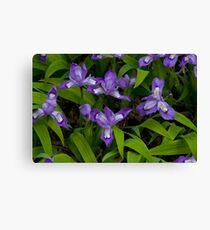 Dwarf Crested Iris Canvas Print