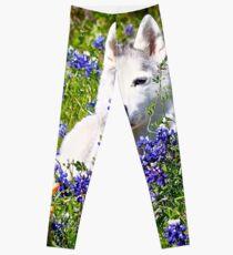 Siberian Husky in Spring Flowers Leggings