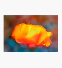 Scents of A Rose Photographic Print