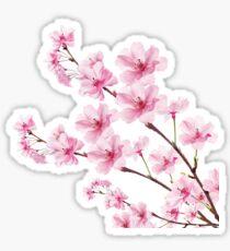 Pegatina Sakura Cherry Blossom