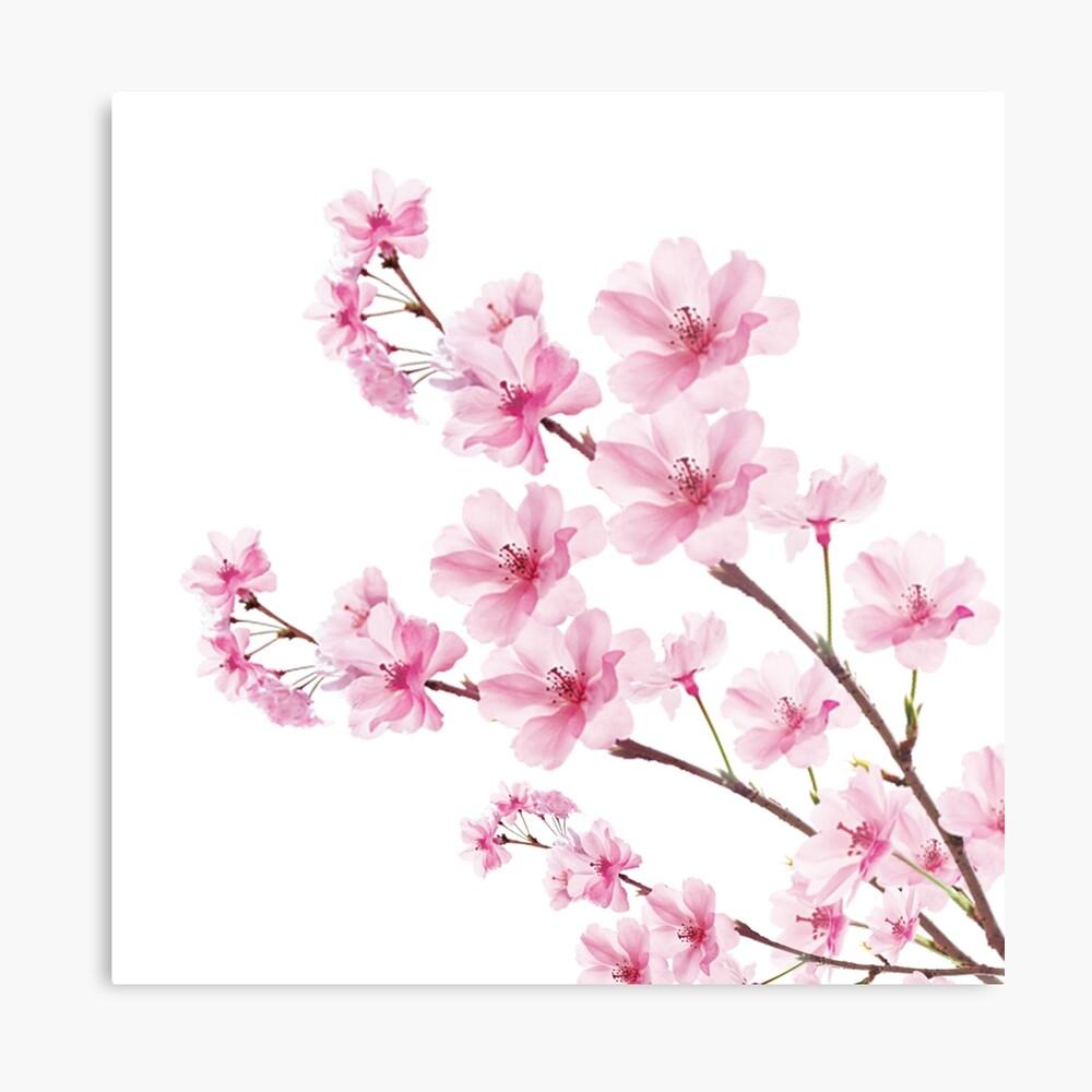 Sakura Cherry Blossom Lámina metálica