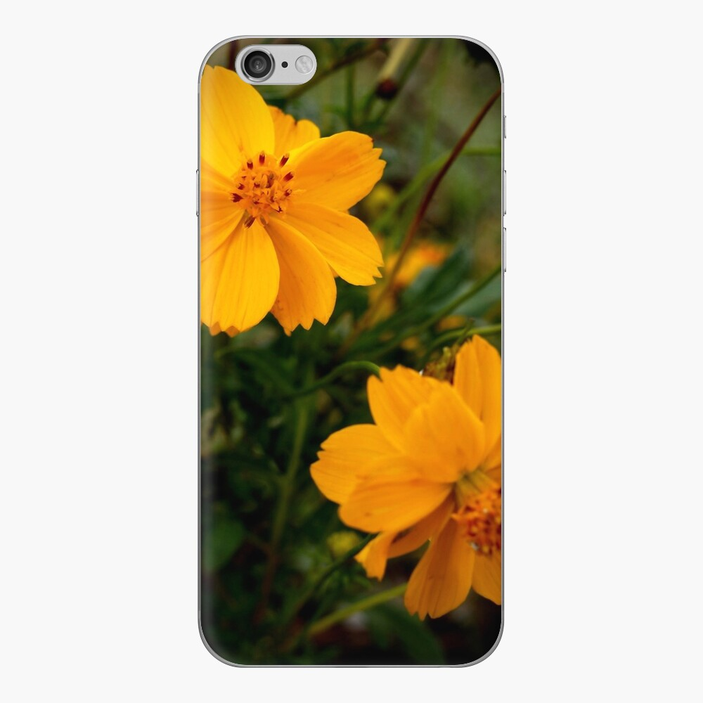 Golden Coreopsis from A Gardener's Notebook iPhone Skin