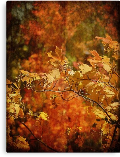 Colors of Autumn by Lucinda Walter