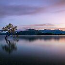 The Tree by Joel Bramley