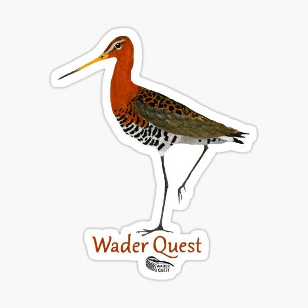 Black-tailed Godwit - Wader Quest Sticker