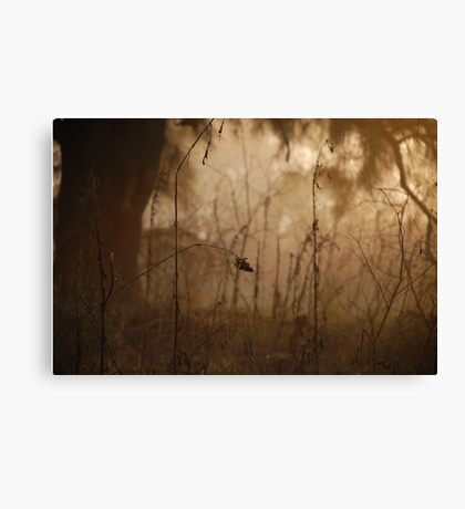 Fine nature Canvas Print