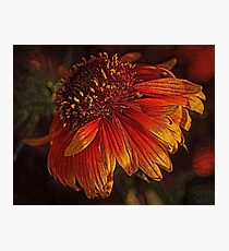 Flowers - Red And Yellow  Photographic Print