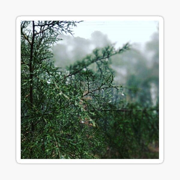 Rain on Evergreens Sticker