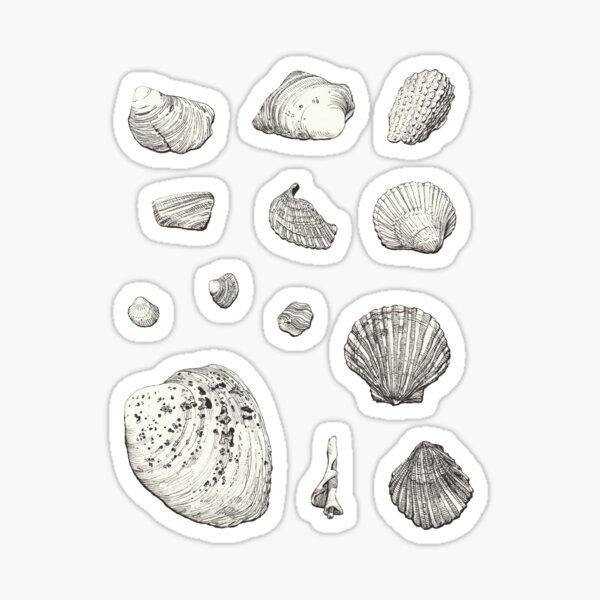 Seashell Drawings Sticker