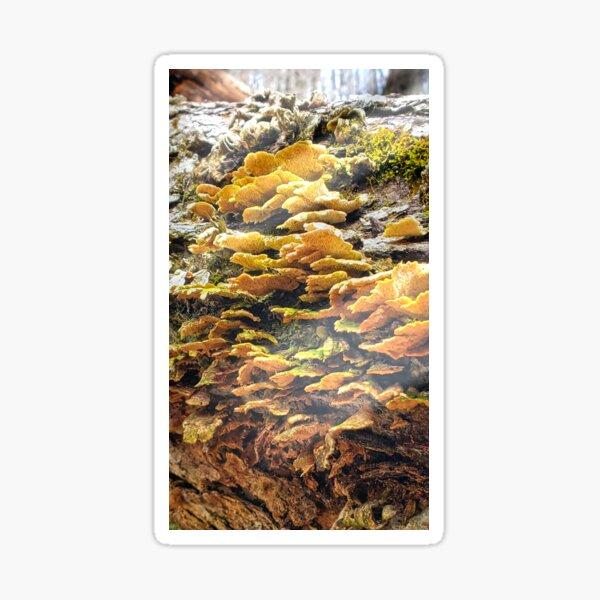 The Golden Beauty of Nature Sticker