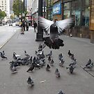 When pigeons ATTACK! by Zack Heistand