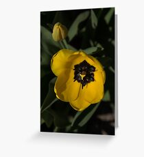 Sunny Yellow in the Shadows - a Cheerful Spring Tulip Greeting Card