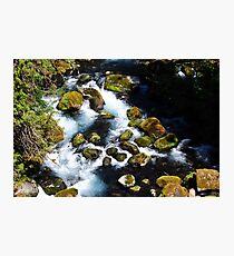 McKenzie River I Photographic Print