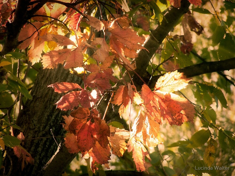Light on the Leaves by Lucinda Walter