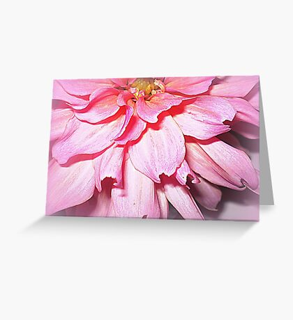 Lovely Pink Petals of the Dahlia Greeting Card