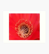 red cactus flower Art Print
