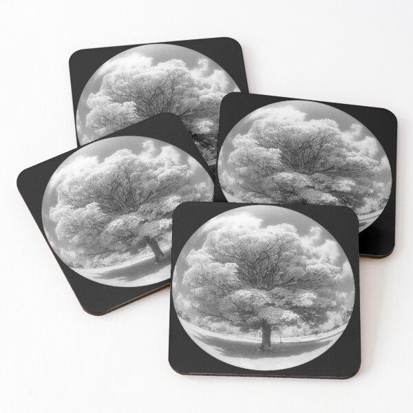 Infrared fisheye tree Coasters (Set of 4)