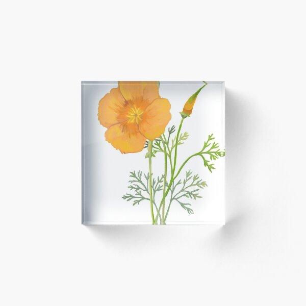 California Poppy Botanical Drawing  Acrylic Block