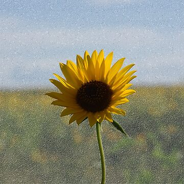 Sunflower by supertin