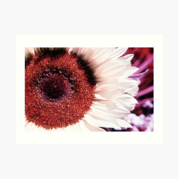 Infrared Sunflower Art Print