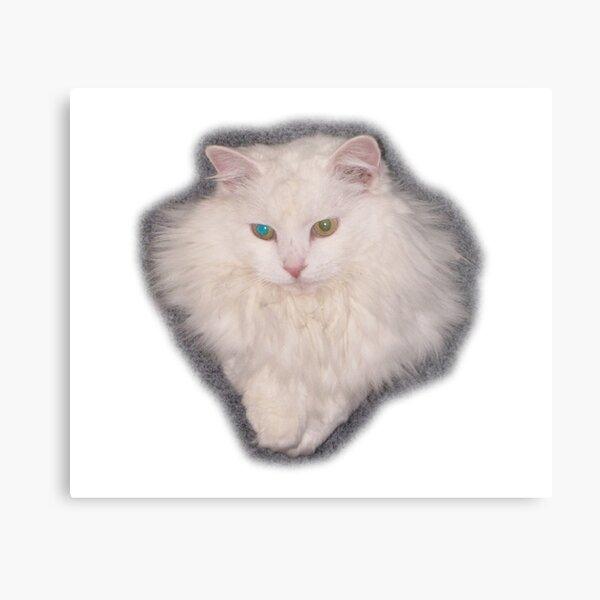 White Angora Cat Head Metal Print