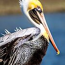 Pelican by Jeff Lowe