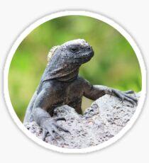 The Snooty Iguana - Comical Animals Sticker