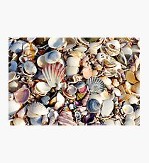 Colourful Shells at Beer Barrel Beach Photographic Print