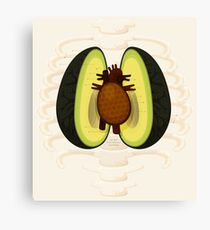 Avocado Anatomy Canvas Print
