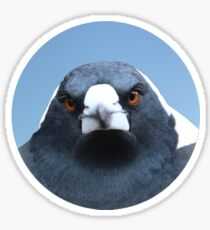 The Angry Bird - Comical Animals Sticker