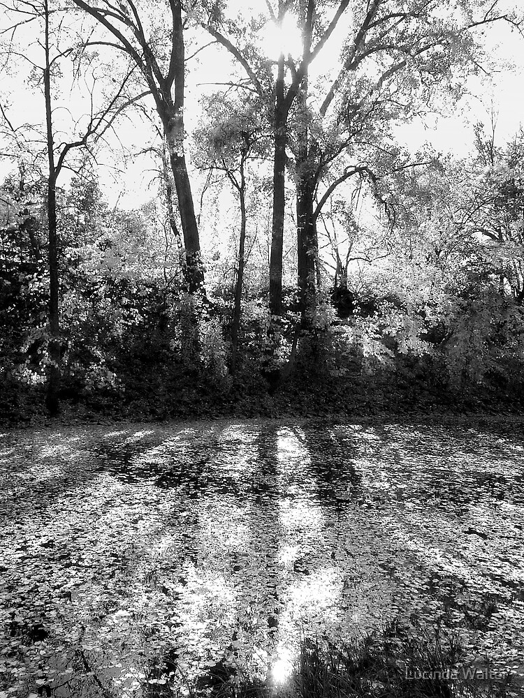 Reflection by Lucinda Walter