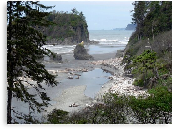 Oympic Peninsula ~ Ruby Beach  by Lucinda Walter