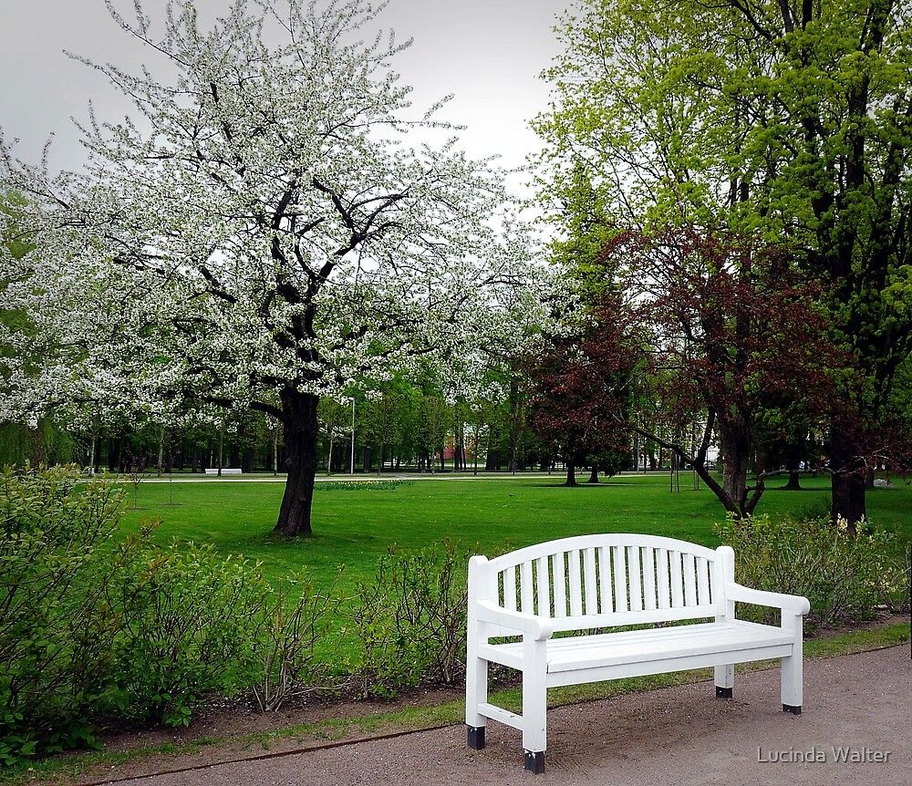 The White Bench by Lucinda Walter