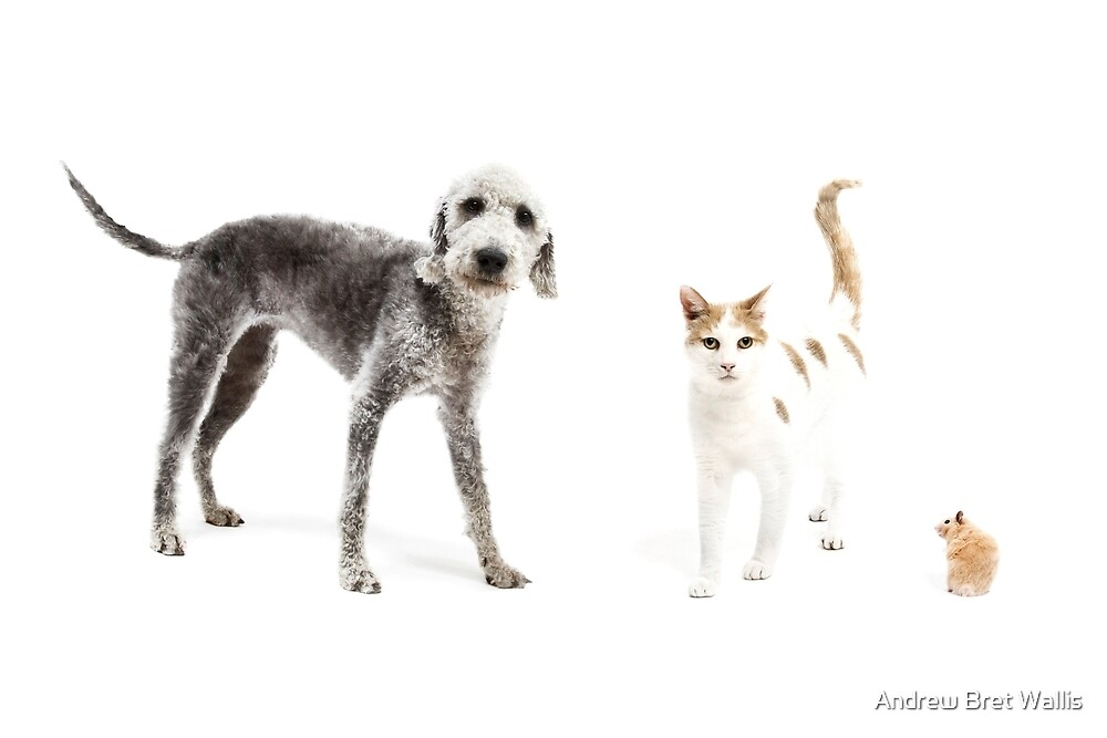 Pet Family by Andrew Bret Wallis