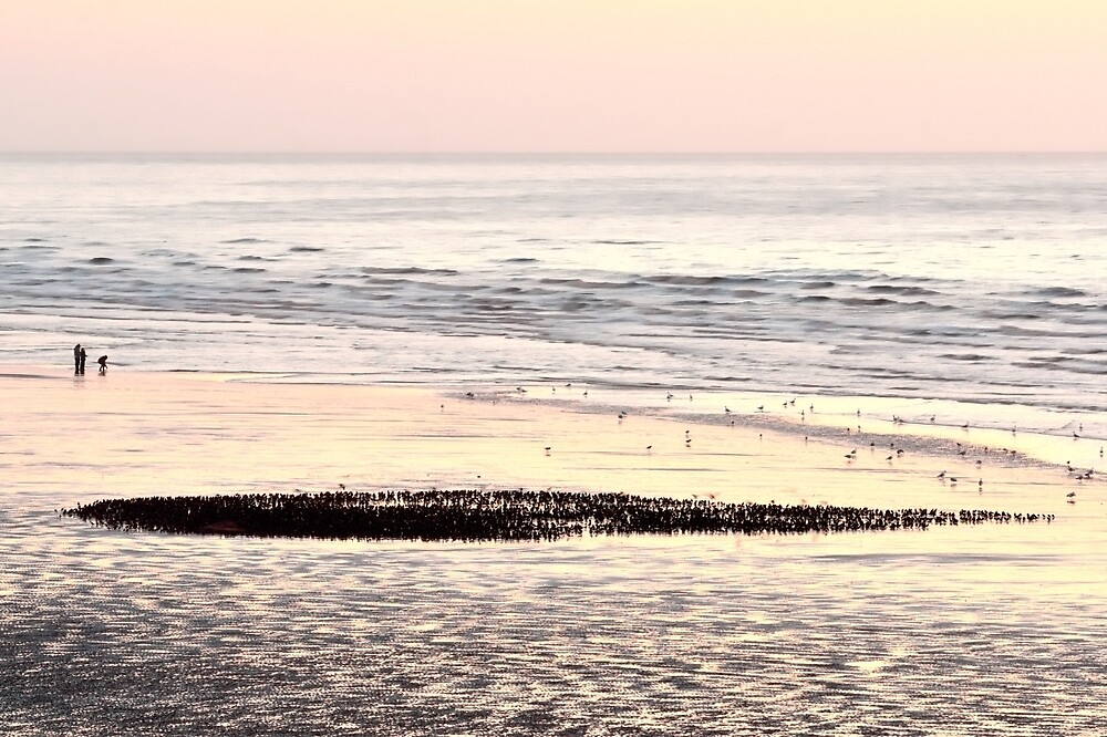 Starlings on Beach by Stephen Frost