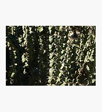 Sharp Shapes and Shadows - Cactus Garden Photographic Print