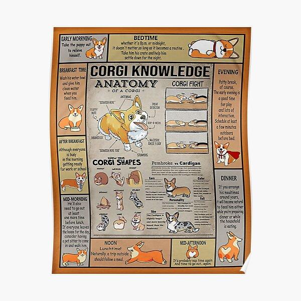 Corgi Knowledge-gigapixel Poster