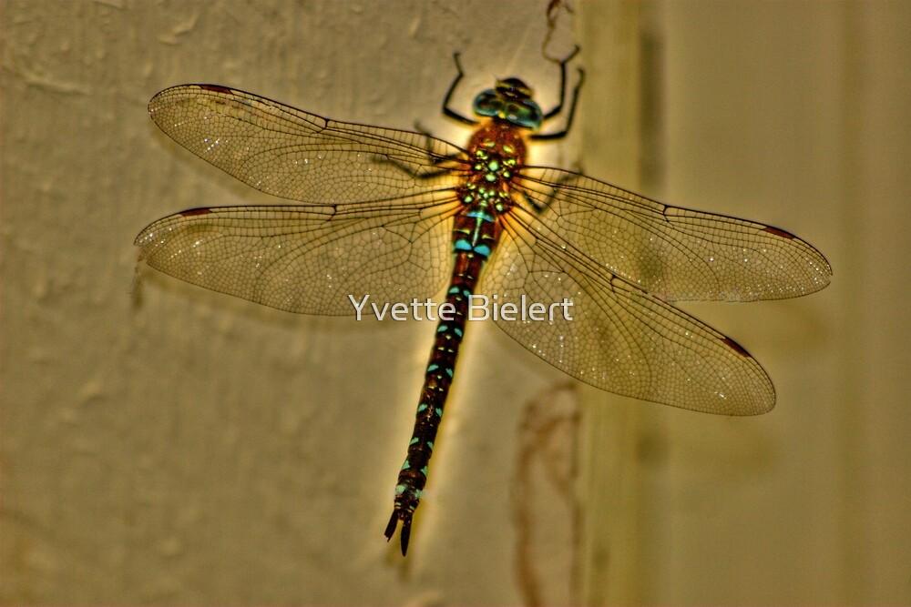 Dragonfly Fable by Yvette Bielert