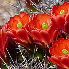 Spring Flowers in the Desert by Lucinda Walter